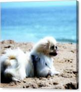 I Am King Of This Beach Canvas Print