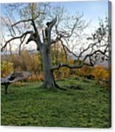 I Am Such A Tree. Canvas Print