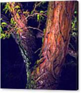 I Am Tree Canvas Print
