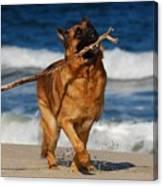 I Got It - German Shepherd Dog Canvas Print