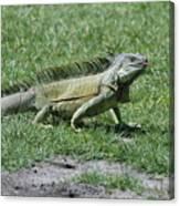 I Iguana Canvas Print