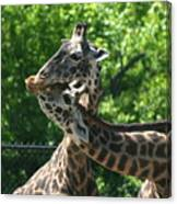 I Just Love Tall Spotted And Handsome Canvas Print