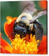 I Like Pollen  Canvas Print