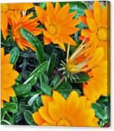 I Love Orange Flowers Canvas Print