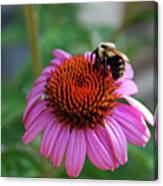 I Love Pollen And Pollen Loves Me Canvas Print