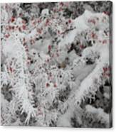 I Love Winter Canvas Print