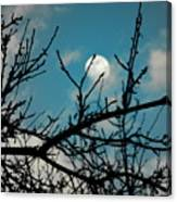I See The Moon Canvas Print