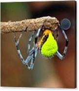 I See You Spider Canvas Print
