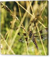 I Spy A Dragonfly Canvas Print