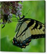I Want To Be A Butterfly Canvas Print