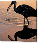Ibis At Dusk Canvas Print