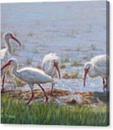 Ibis Excursion Canvas Print