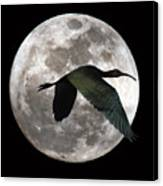 Ibis Moon Canvas Print