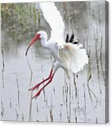 Ibis Soft Water Landing Canvas Print