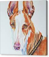 Ibizan Hound Canvas Print