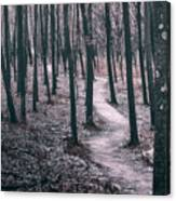 Ice Age Trail Near Lapham Peak Canvas Print