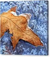 Ice-bound Leaf Canvas Print