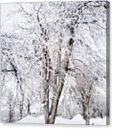 Ice Covered Trees One Painted Canvas Print