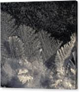 Ice Crystals Form Feather Shapes On Ice Canvas Print