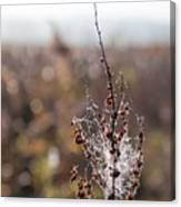 Ice Crystals On Dried Wild Flower Canvas Print