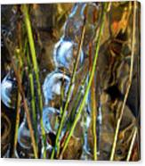 Ice Jewels On Grass Canvas Print