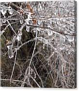Ice Pearls Canvas Print