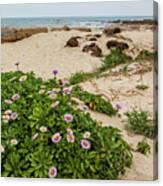 Ice Plant Booms On Pebble Beach Canvas Print