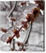 Ice Rain In Springtime Canvas Print