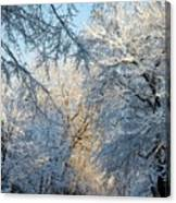 Ice Storm On The 6th IIi Canvas Print