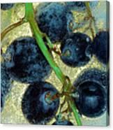 Ice Wine Canvas Print