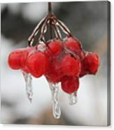 Ice Wrapped Berries Canvas Print