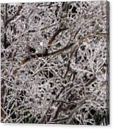 Iced Branches Canvas Print