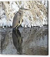 Iced Heron Canvas Print
