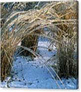 Iced Ornamental Grass Canvas Print