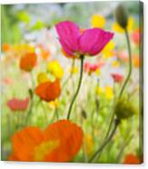 Iceland Poppies Canvas Print