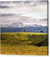 Icelandic Horses On The Countryside  Canvas Print