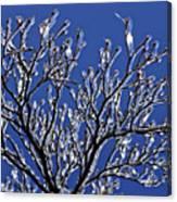 Icey Sparkle Canvas Print