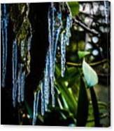 Icicles 3 Canvas Print