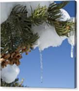 Icicles On Pine Tree Canvas Print