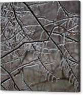 Icy Branches Canvas Print