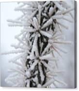 Icy Cactus Canvas Print