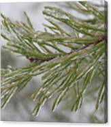 Icy Fingers Of The Pine Canvas Print