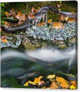 Icy Foliage Stream Canvas Print
