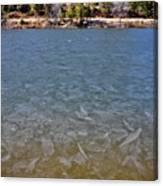 Icy Lake Canvas Print