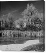 Icy Marsh Canvas Print