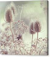 Icy Morning. Wild Grass Canvas Print