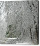 Icy Street Trees Canvas Print
