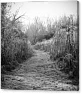 Icy Trail In Black And White Canvas Print