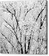 Icy Tree Canvas Print