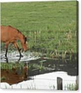 Idaho Farm Horse 2 Canvas Print